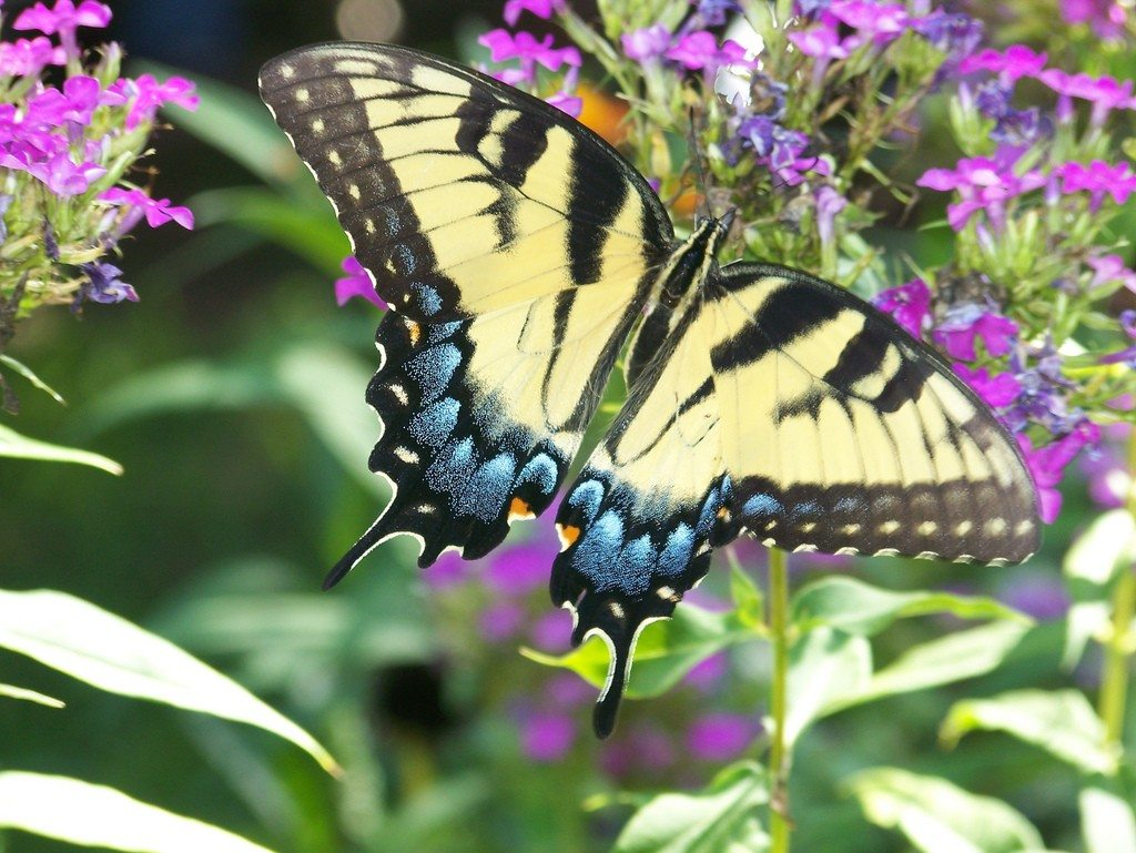 Butterfly Gardens: Flowers And Plants That Attract Butterflies