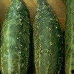 cucumber mosaic