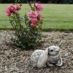 mulch roses