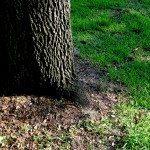 shade-grass