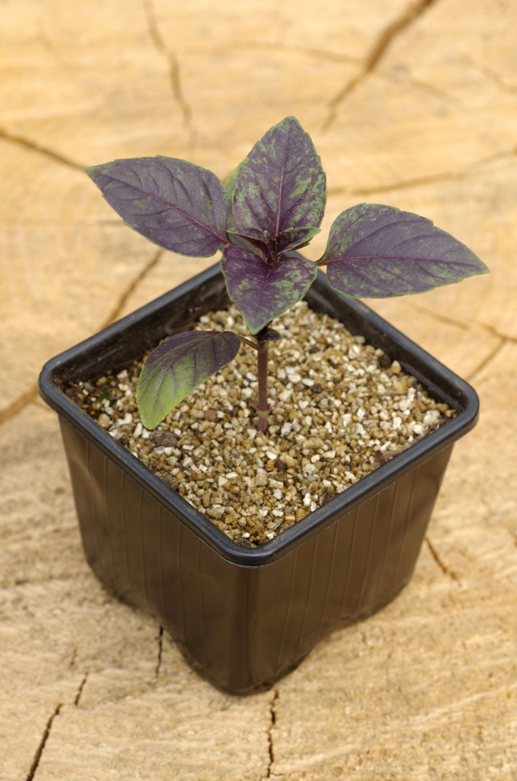 Soilless Growing Mediums Learn How To