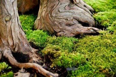 moss-garden