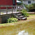 poor-yard-drainage