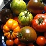 heirloom-tomatoes