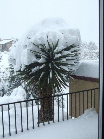 yucca-snow