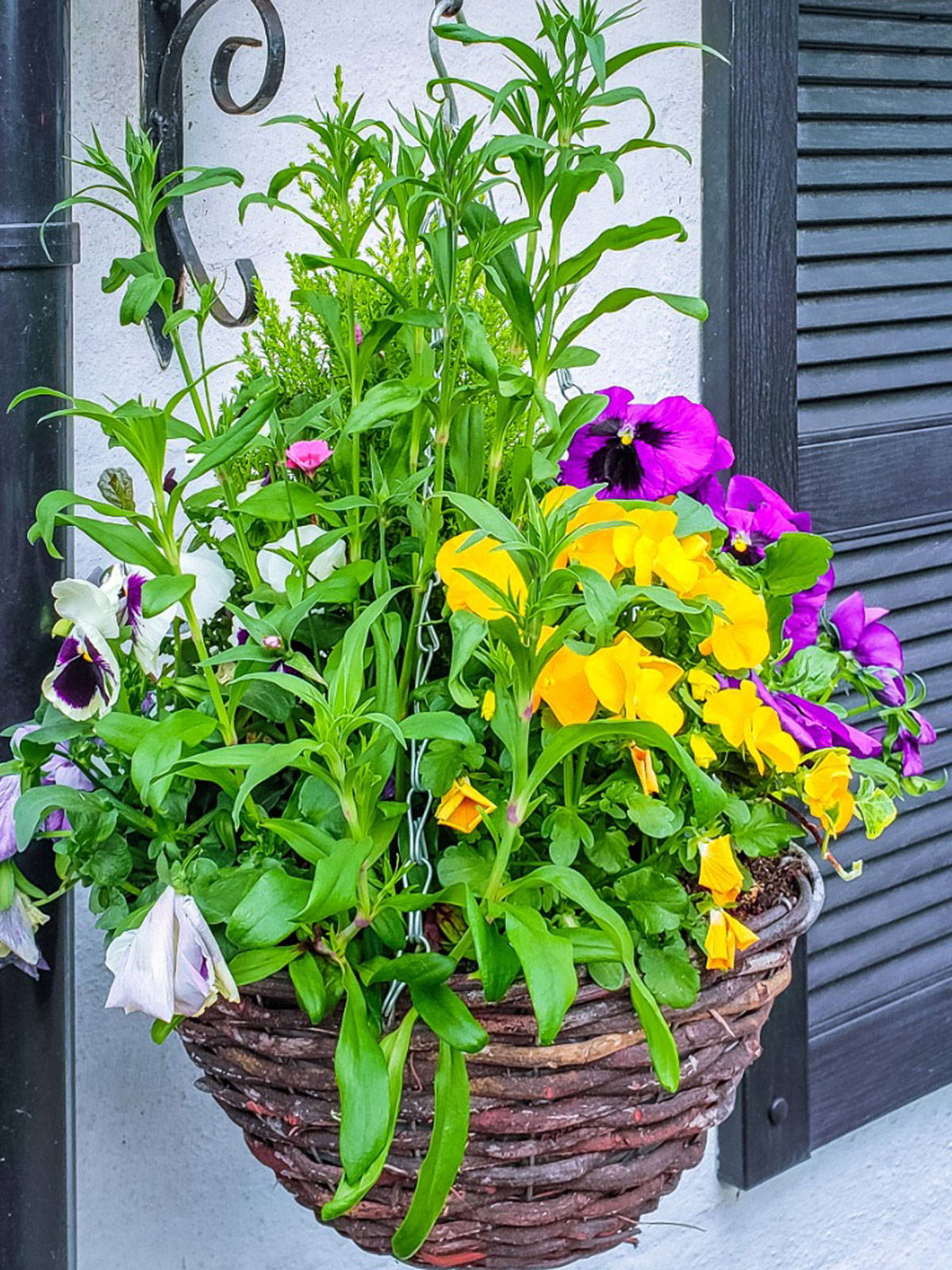 Hanging Basket Plants Best Flowers For
