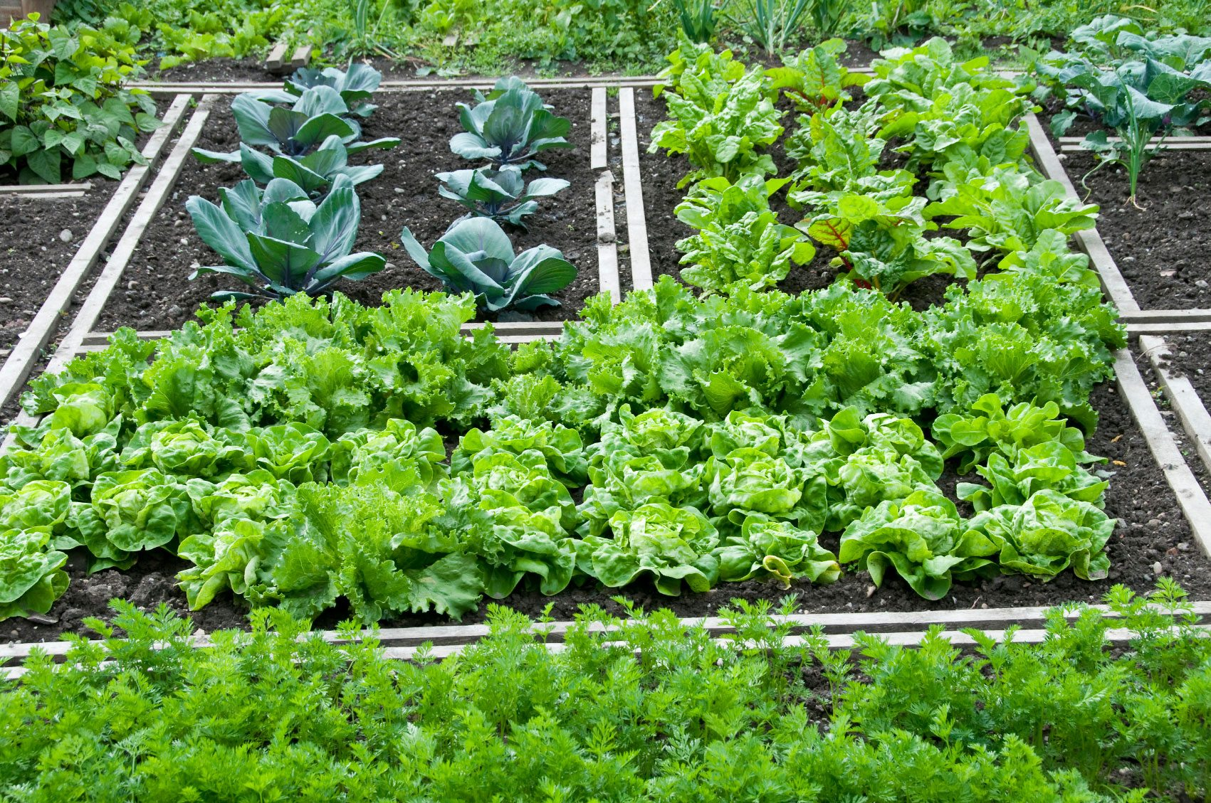 Growing vegetables blogspot