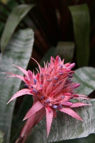urn-plant-flower
