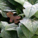 silver-foliage