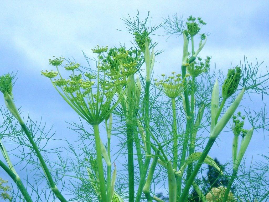 Growing herbs pinterest