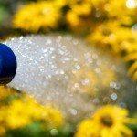 water-a-garden