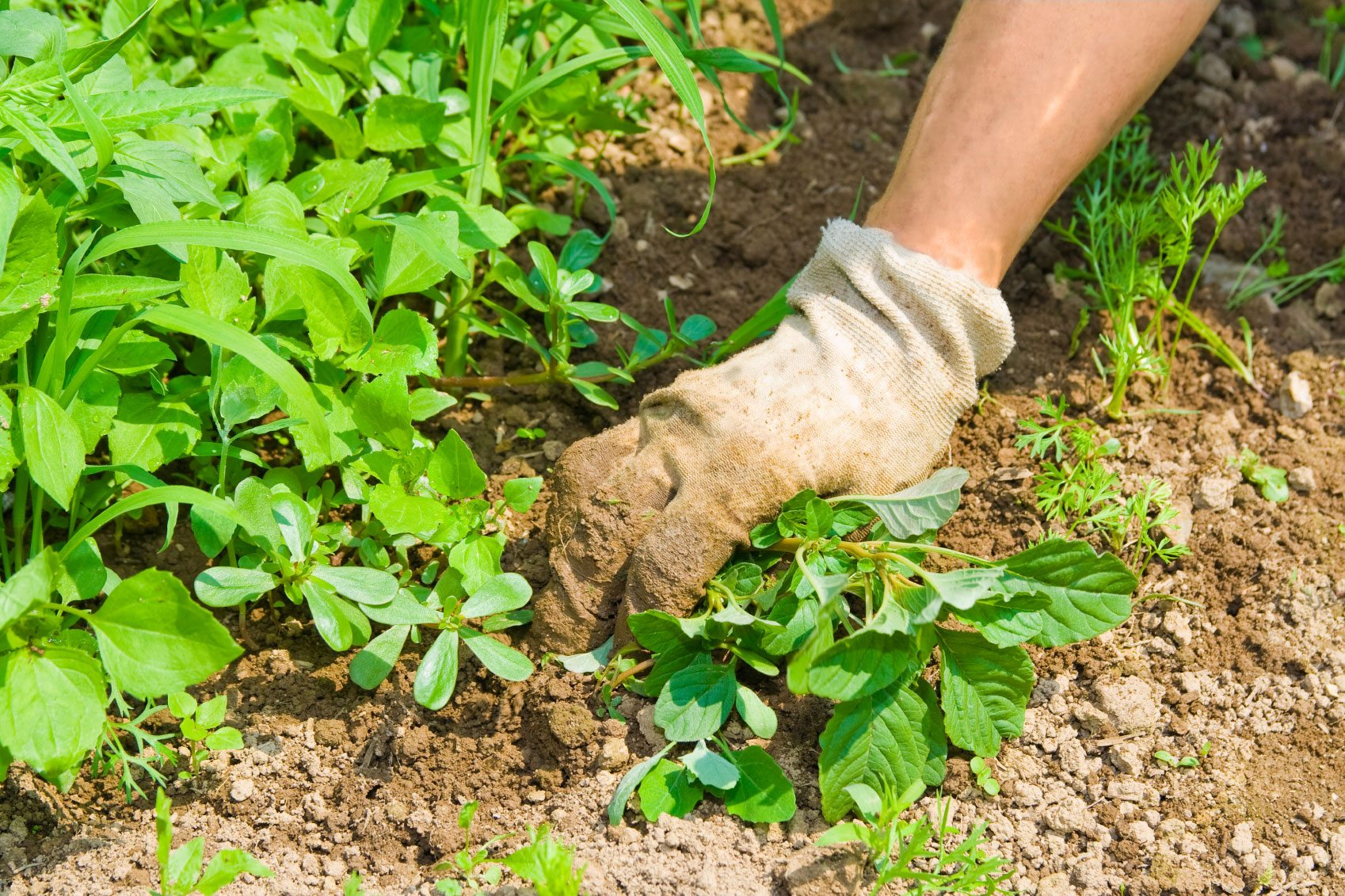 Vegetable Weed Control: How To Keep Weeds Out Of A Vegetable Garden
