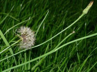 Garden weed management: how to control weeds in your garden
