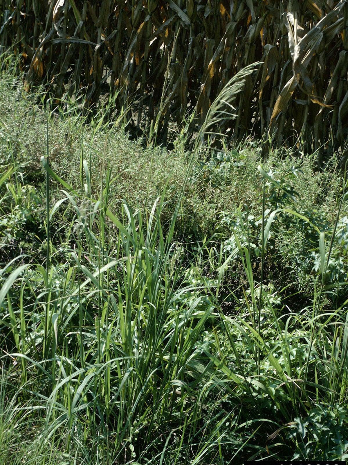 Bahia Grass Preventer Tips To Prevent And Kill Bahia Grass