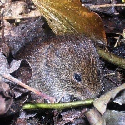 mouse-in-garden