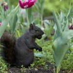 squirrel in bulbs