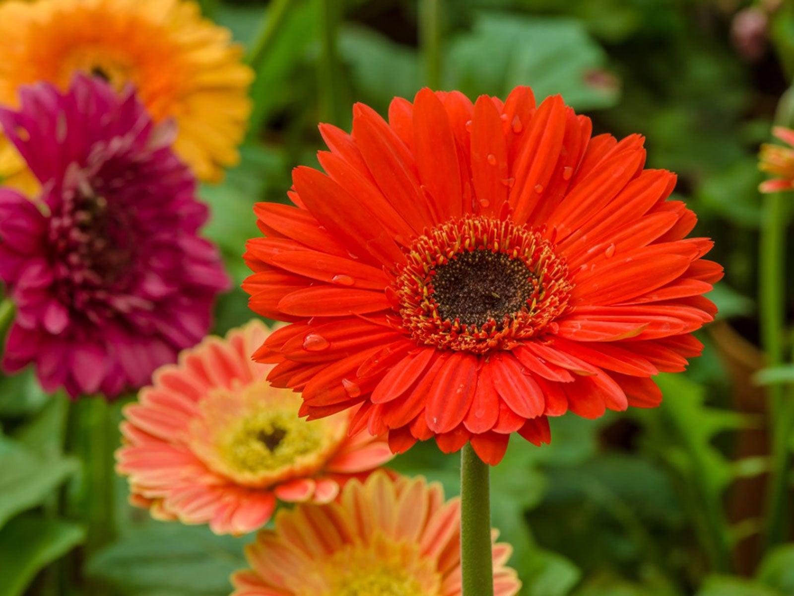 Type of Flowers