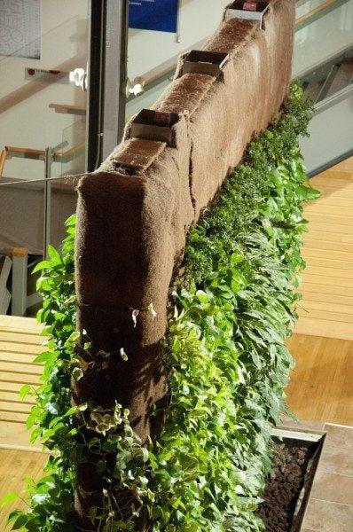 indoor-living-wall