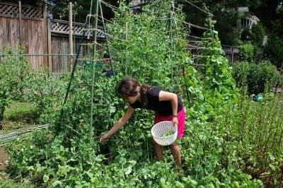 Children\'s Garden Ideas - Teaching Kids To Design A Garden