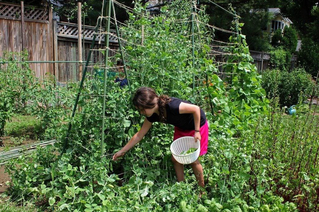 Children s garden ideas teaching kids to design a garden for Gardening with children