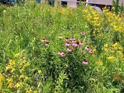 prairie-garden