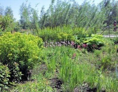 plants for bog gardens how to build a bog garden - Bog Garden