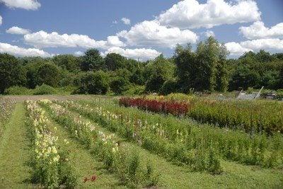 cutting-garden