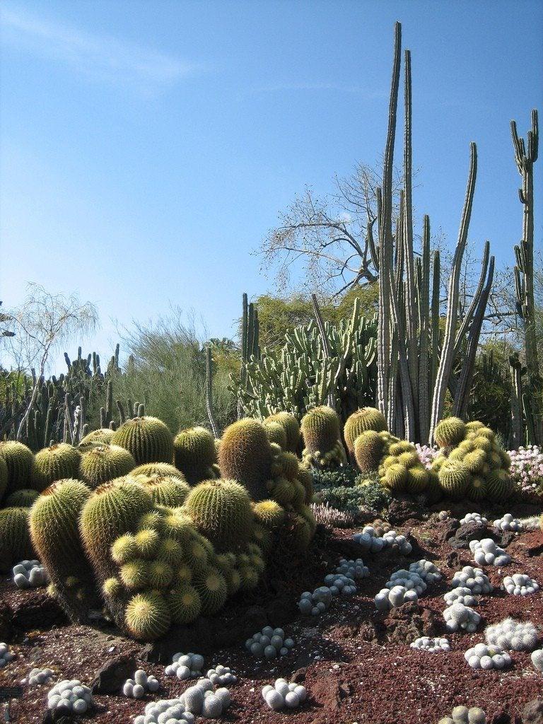 Desert Garden Theme What Plants Are Best For Desert Gardens