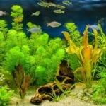 What Is An Aqua Bonsai Plant Learn About Underwater Bonsai Trees