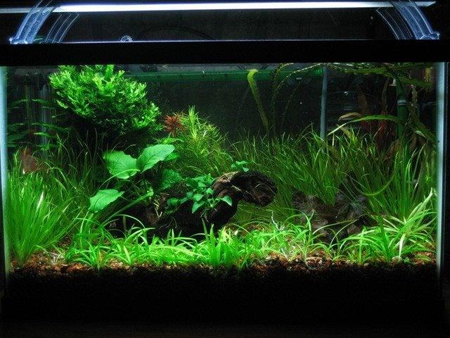 Growing Aquarium Plants How To Grow