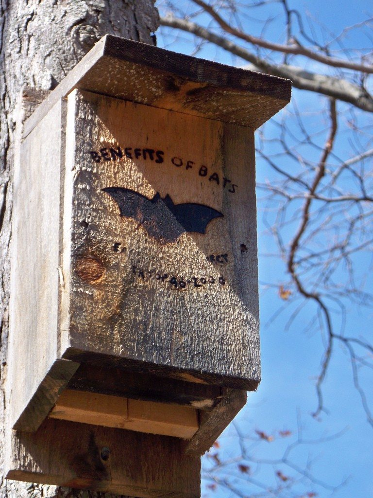 bat house plans tips for building a bat house and