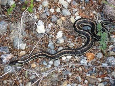 Providing a garden snake habitat – how to attract snakes in a garden
