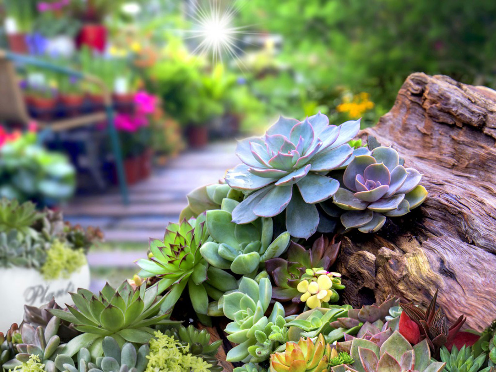 Succulent Garden Design Planning Growing And Care Of Succulent Garden Plants