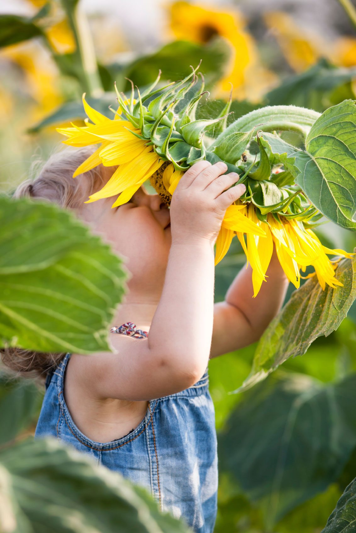 Kids Gardening Projects How To Create A Sunflower House Garden Theme