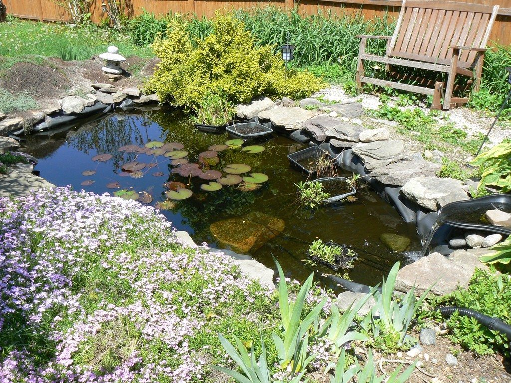Diy Water Gardens Designing A Backyard