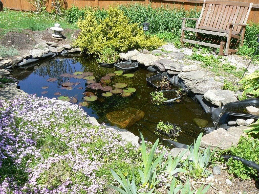 DIY Water Gardens: Designing A Backyard Water Garden