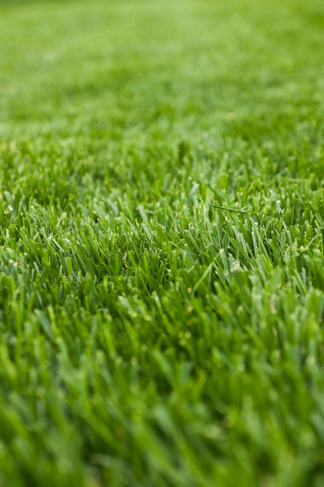 cool season grass identifiers