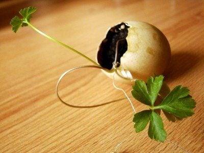 eggshell-pot