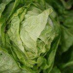 head-lettuce