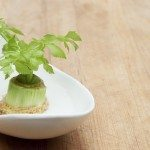 celery bottom