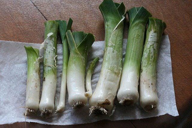 Garden Leek Harvest - How And When To Harvest Leeks Leek Companion Plants