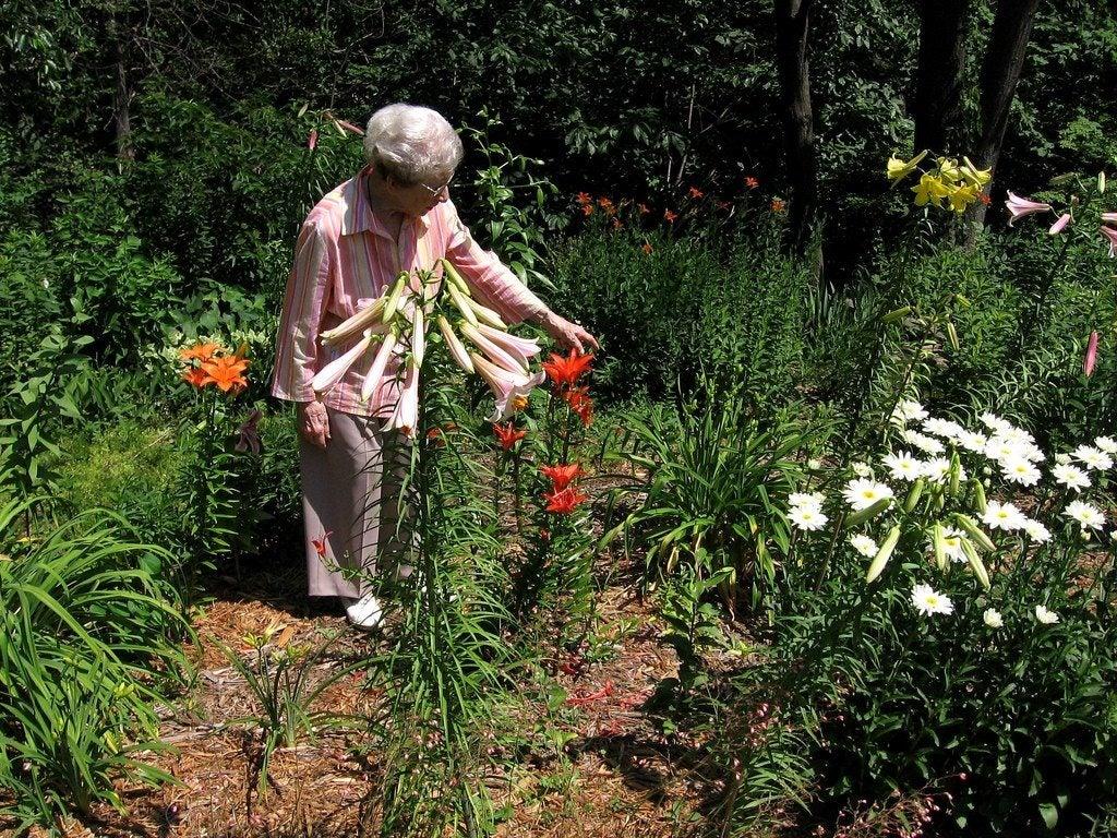 Senior Gardening Activities How To Design Elderly