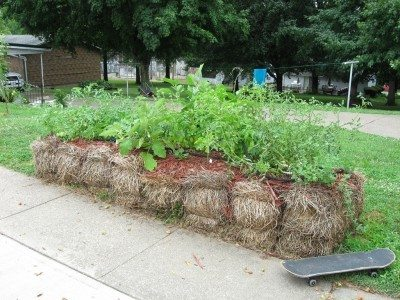 Starting a straw bale garden: how to plant straw bale garden beds