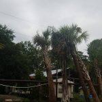 palm frizzle top