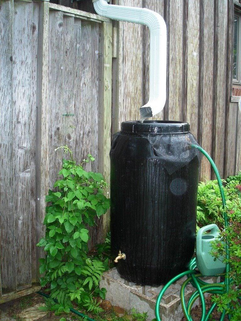 Rainwater Collection Harvesting Rainwater With Rain Barrels