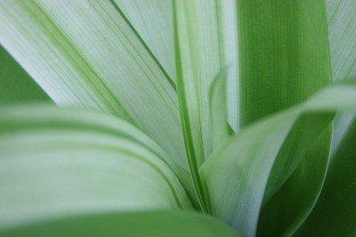 variegated-plant-leaves