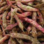 cranberry-beans