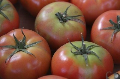 green shoulder tomatoes