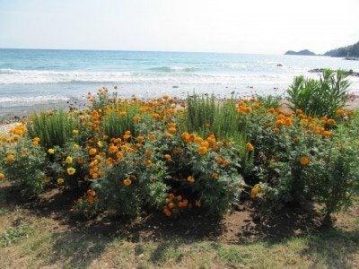 seaside-plants