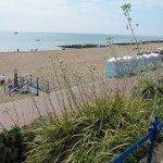 coastal-plantings